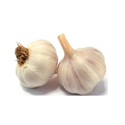 Garlic PNG - Garlic PNG
