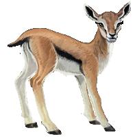 Gazelle PNG - 27755