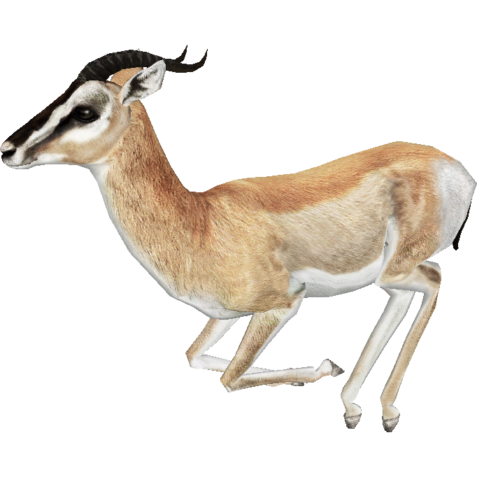 Gazelle PNG - 27750