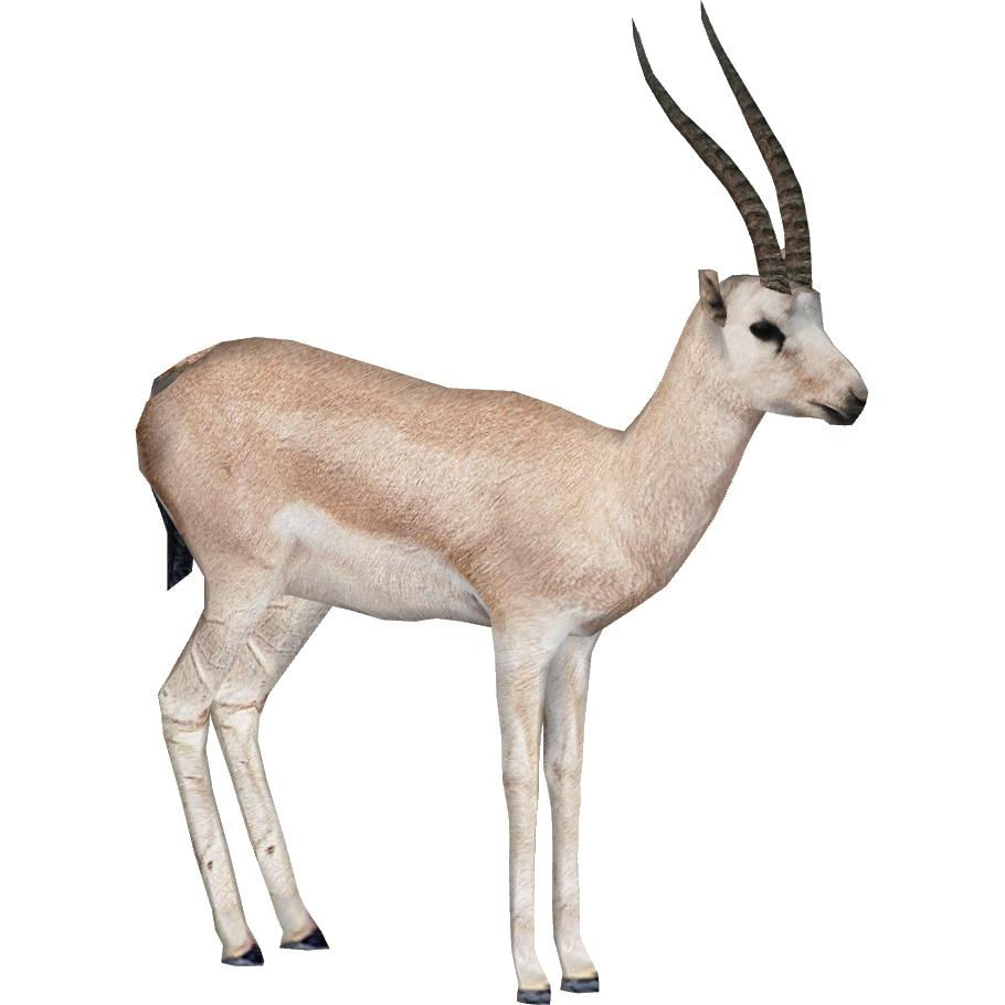 Gazelle PNG - 27762