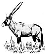 Gemsbok - Gemsbok PNG
