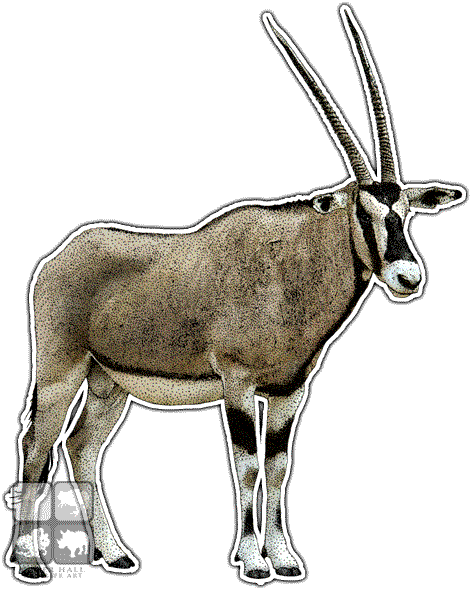 Gemsbok Art decal - Gemsbok PNG