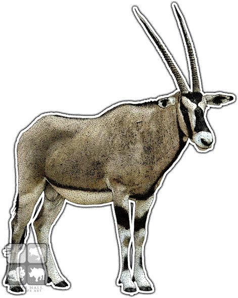 Gemsbok Art Decal - Gemsbok PNG
