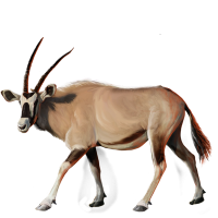 Huge item gemsbok 01 - Gemsbok PNG