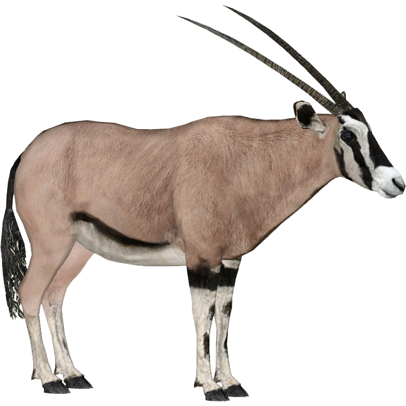 Image - Beisa Oryx (DRAGON-unit911).png | ZT2 Download Library Wiki |  FANDOM powered by Wikia - Gemsbok PNG