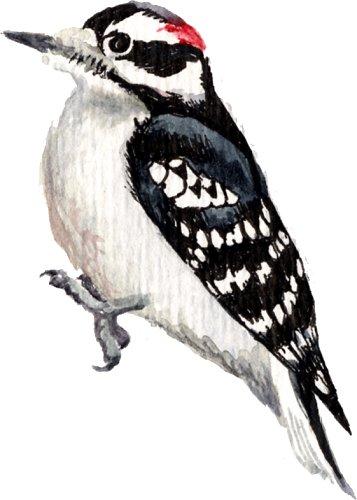 Genomic - Woodpecker PNG