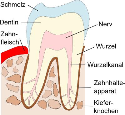 Der gesunde Zahn u2013 Gesundheit nur mit gesunden Zähnen - Gesunder Zahn PNG