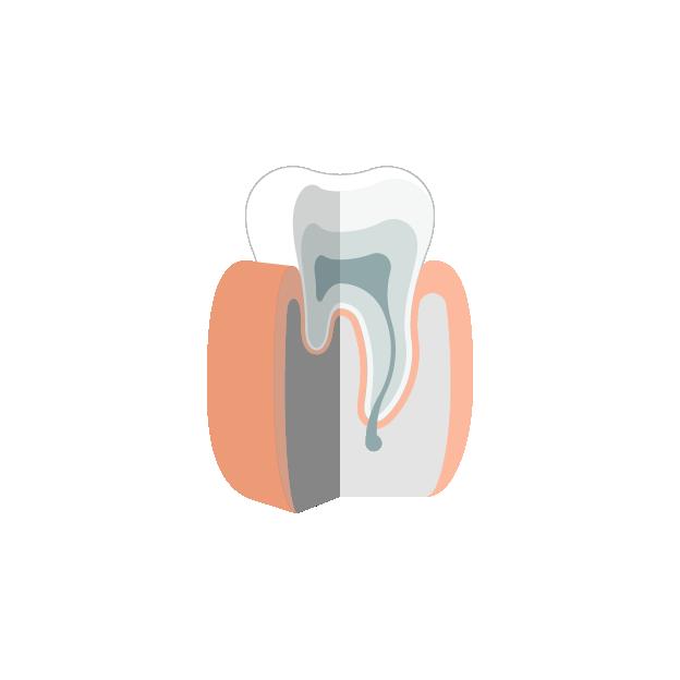 Endodontie Gesunder Zahn - Gesunder Zahn PNG