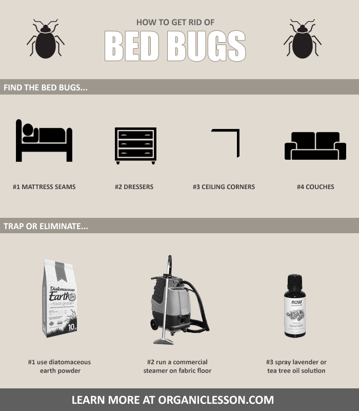 6 Natural Ways To Get Rid Of Bed Bugs At Home In One Day