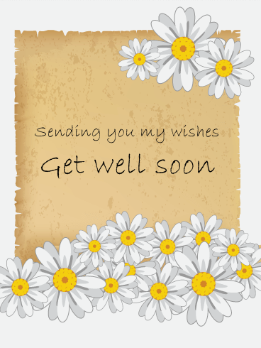 White Daisy Flower Get Well Card | Birthday u0026 Greeting Cards by Davia - Get Well Card PNG