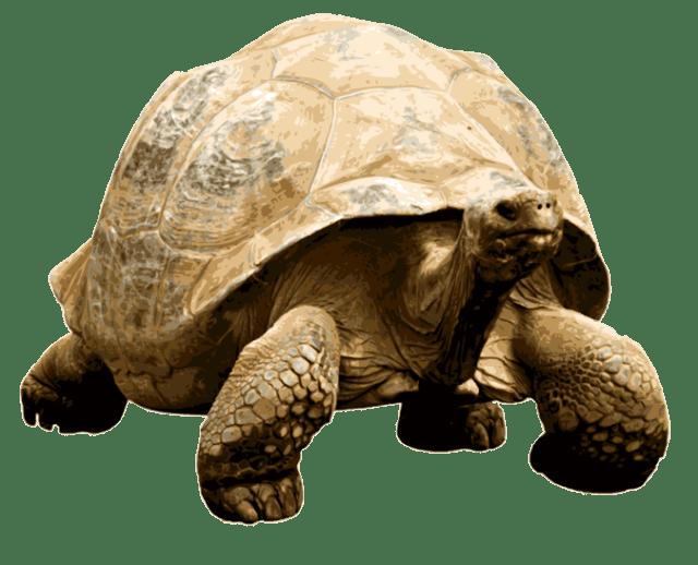 Tortoise PNG - 7213