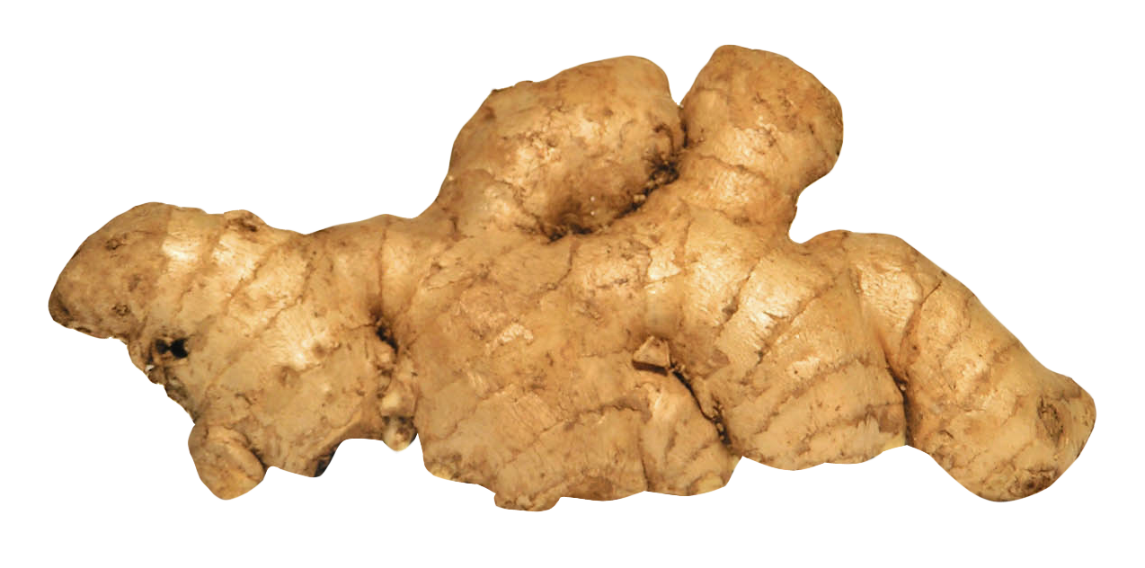 Ginger HD PNG