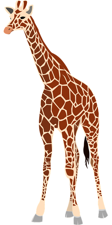 Giraffe, Mammal, Animal, Herb