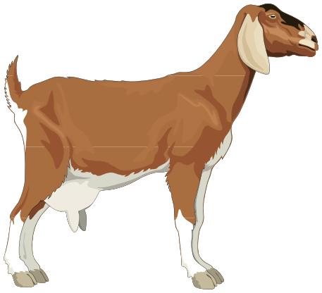 Goat PNG - 15771