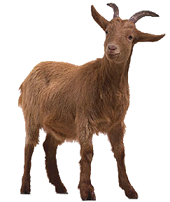 Goat PNG - 15763