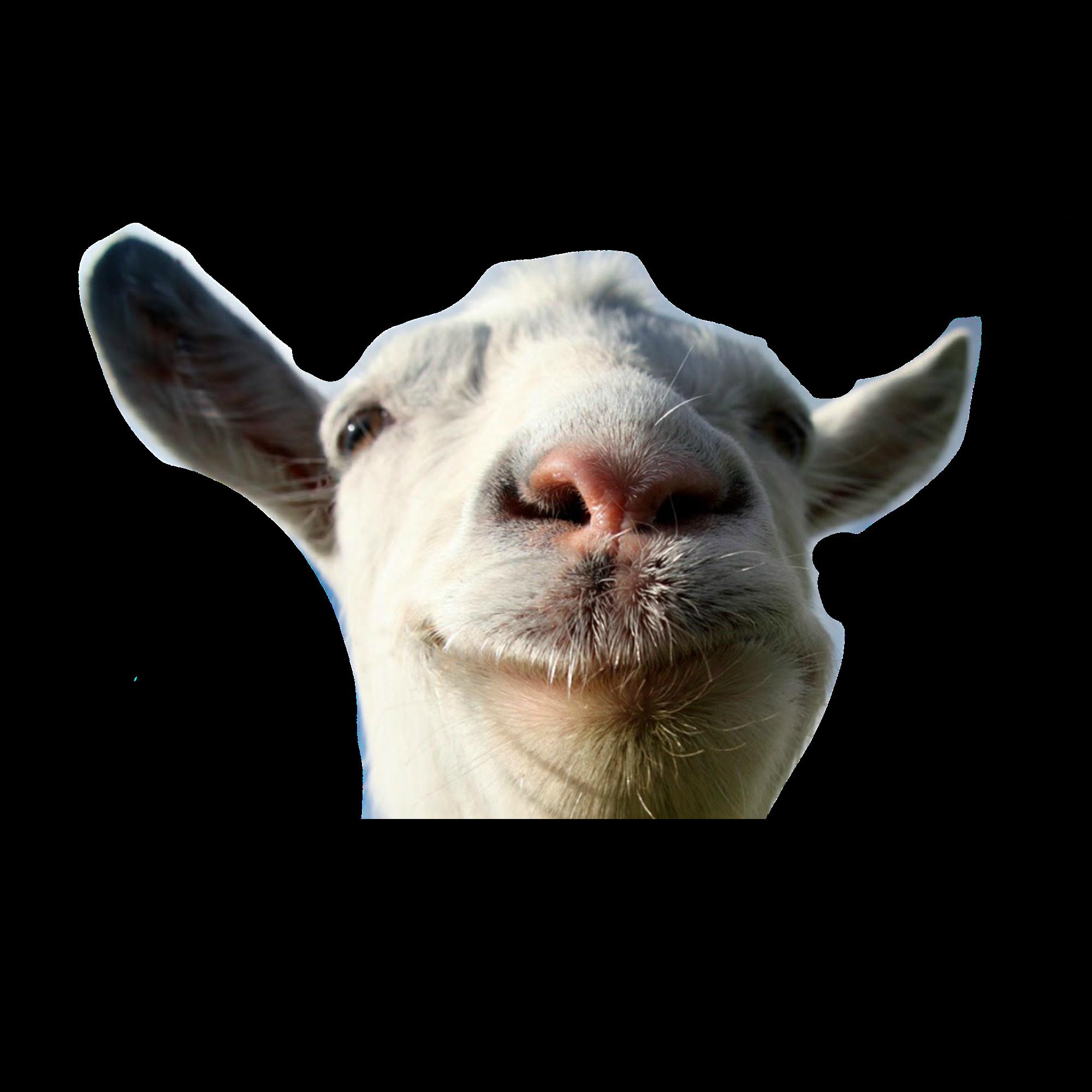 Goat PNG - 15765