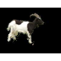 Goat PNG - 15769