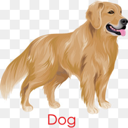 Golden Retriever dog, Golden, Hand Painted, PHOTO PNG and Vector - Golden Retriever PNG