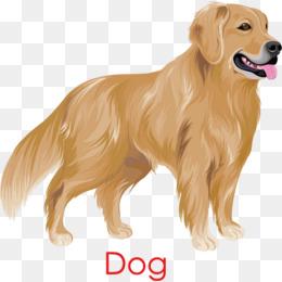 Golden Retriever dog, Golden, Hand Painted, PHOTO PNG and Vector - Golden Retriever PNG