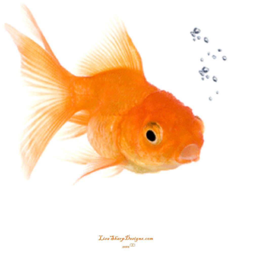 Goldfish PNG HD - 124071