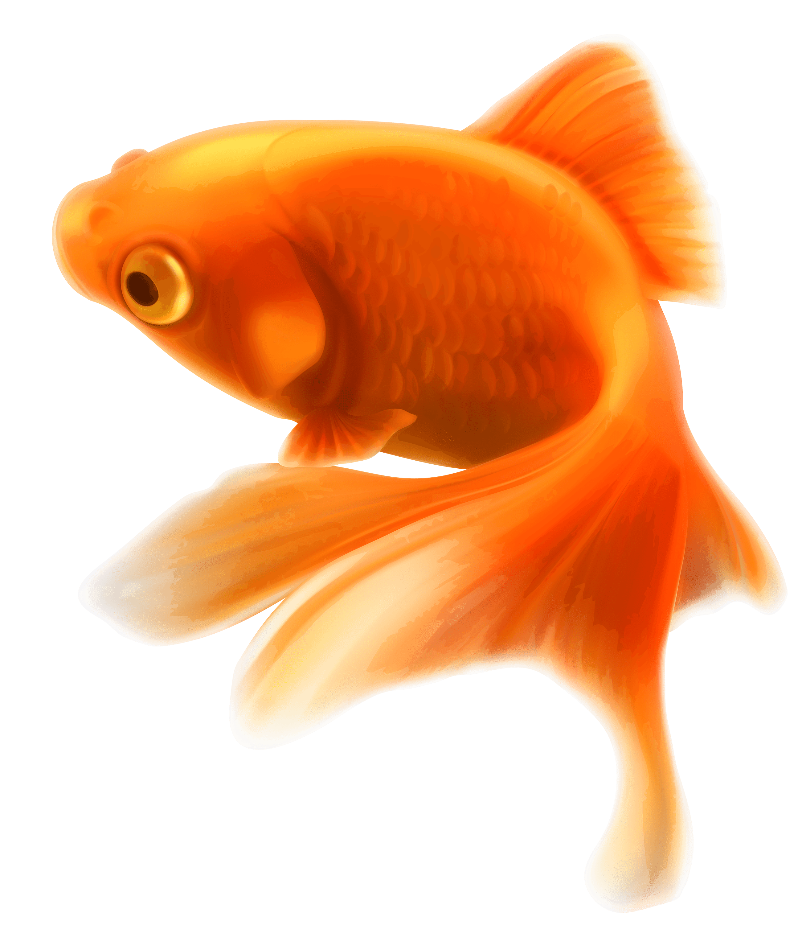 Goldfish PNG HD