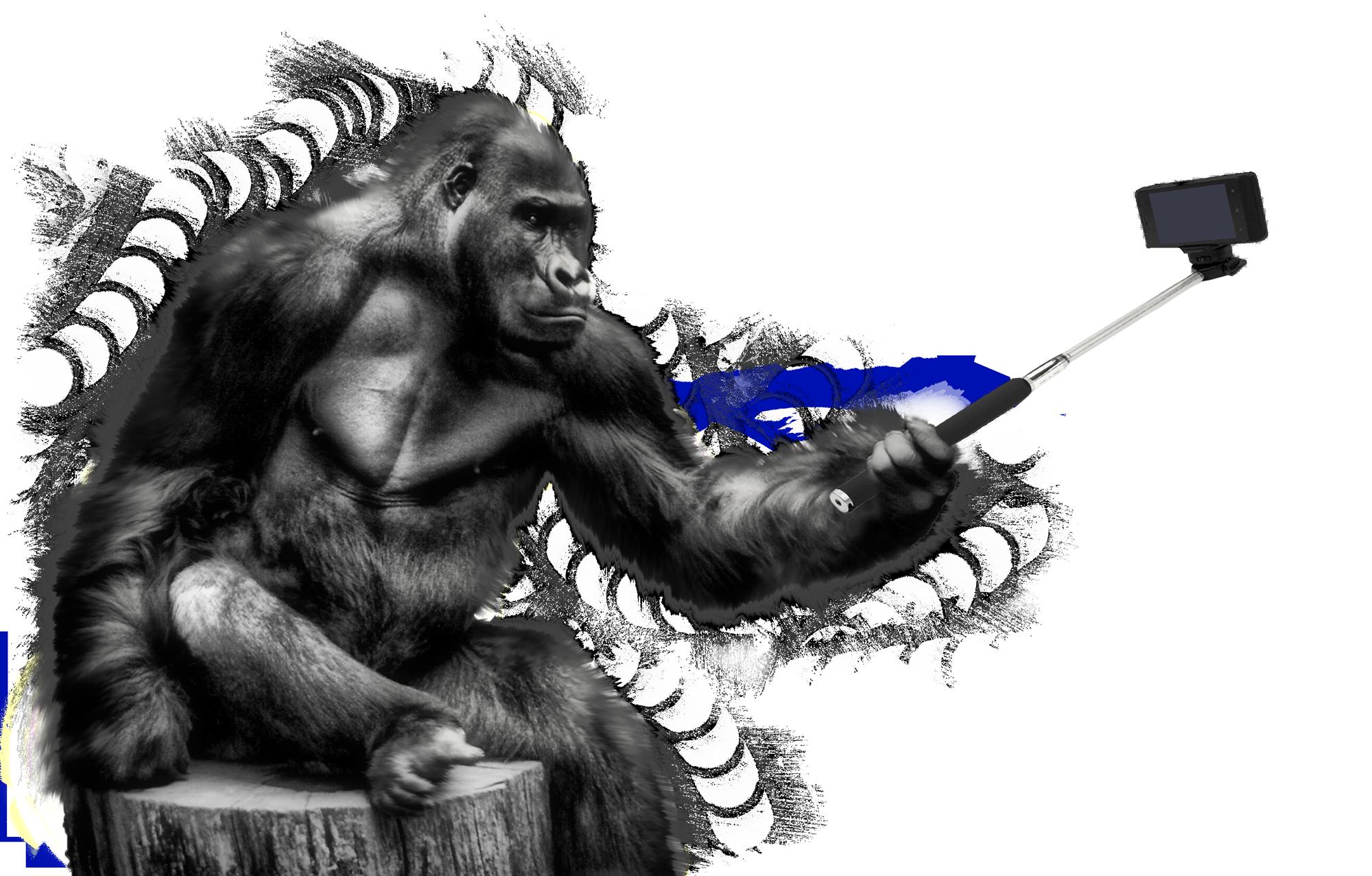 Gorilla PNG - 12154