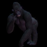 Gorilla PNG - 12149