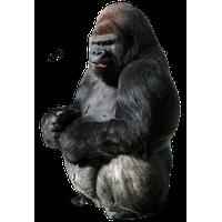 Gorilla PNG - 12156