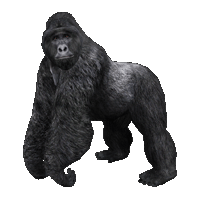 Gorilla PNG - 12159