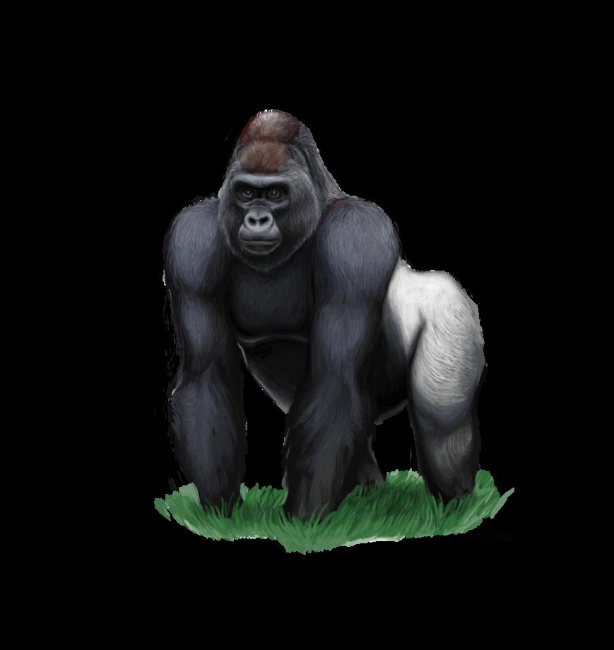 Gorilla PNG - 12151