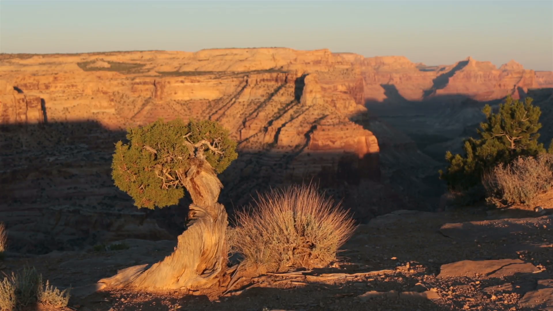 Rustic Cedar Tree San Rafael Wedge Overlook Grand Canyon HD 9873 Stock  Video Footage - VideoBlocks - Grand Canyon PNG HD