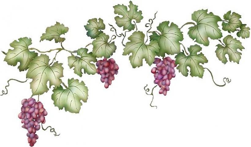 Grape Vine PNG HD Free - 121234