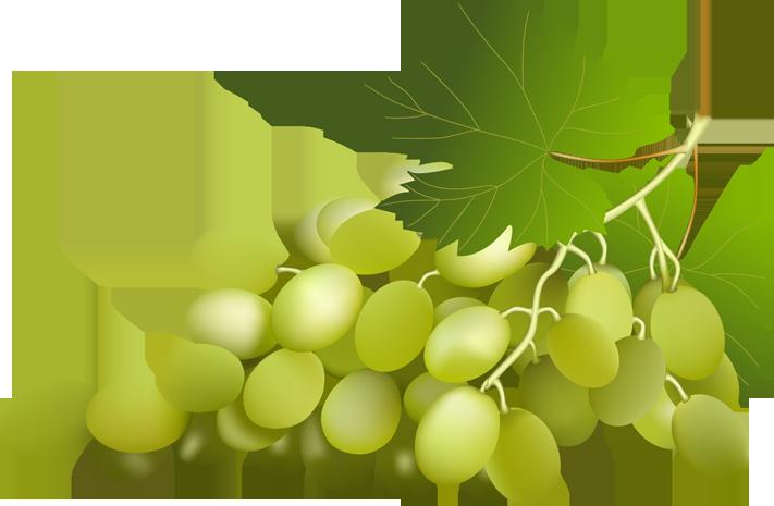 Grape Vine PNG HD Free - 121225