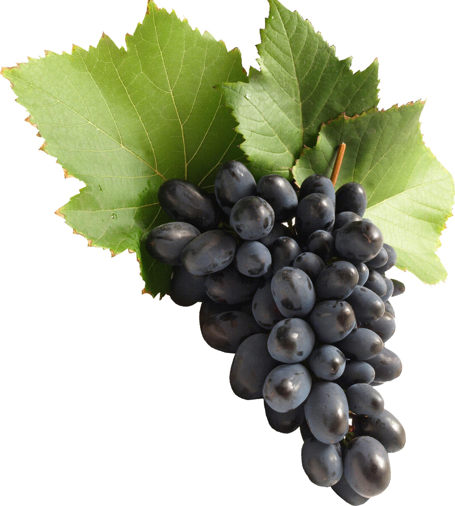 Grape Vine PNG HD Free - 121229