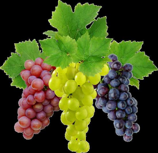 Grape Vine PNG HD Free - 121232
