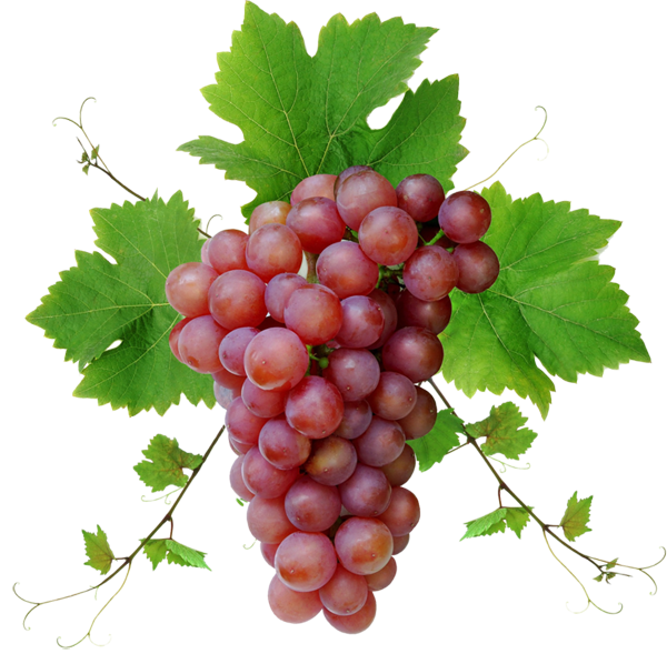 Grape Vine PNG HD Free - 121226