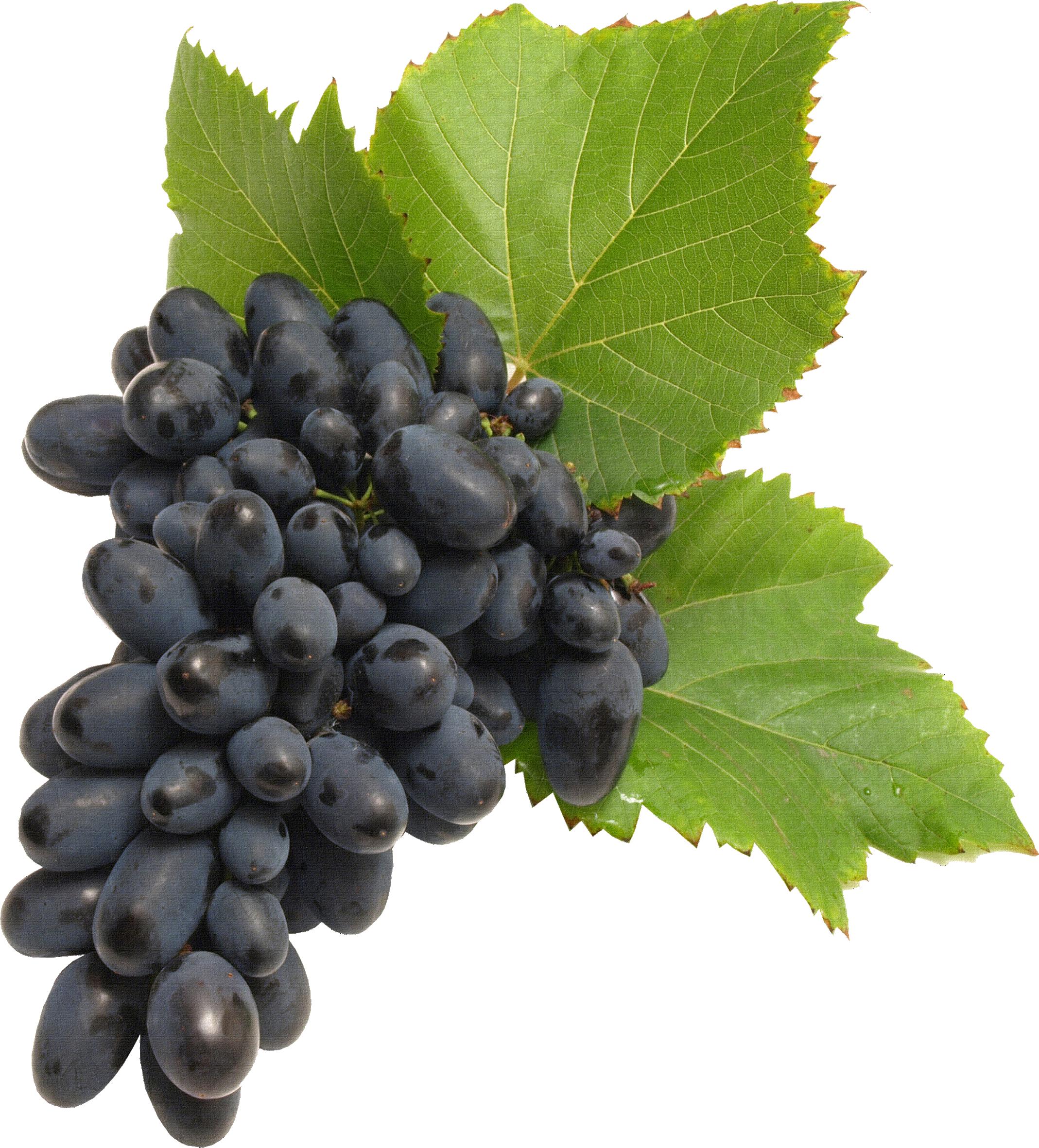 Grape Vine PNG HD Free - 121233