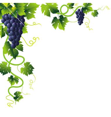 Grape Vine PNG HD Free - 121241