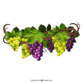 Grape Vine PNG HD Free - 121236