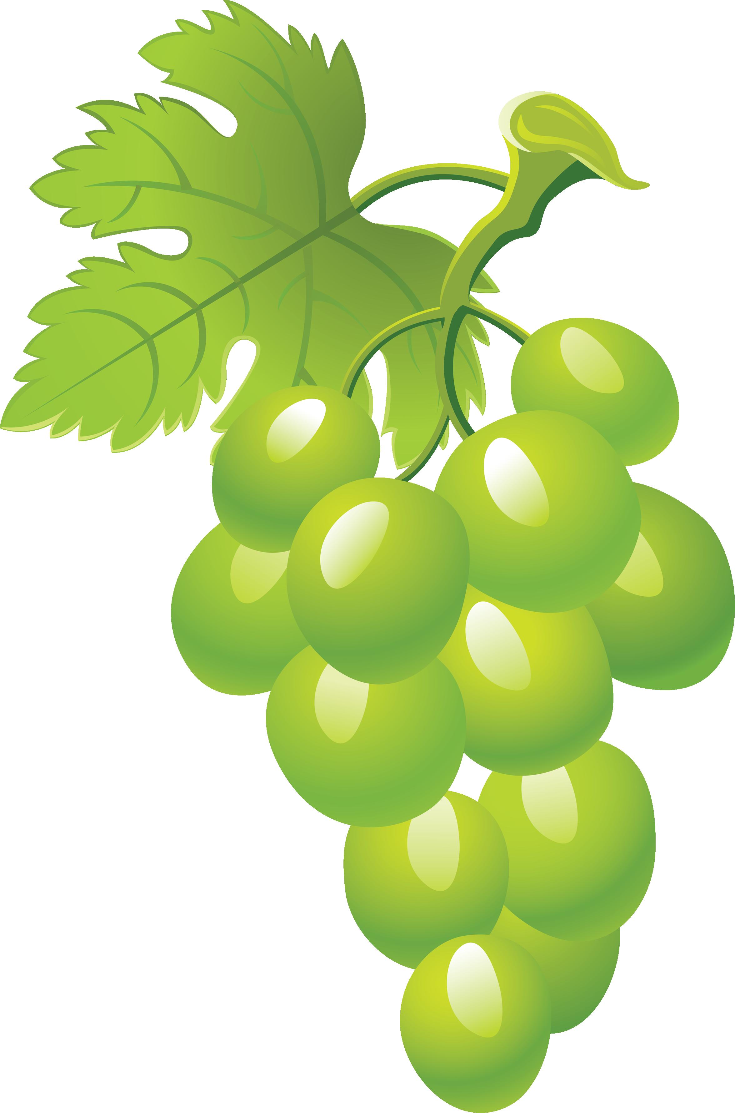 Grape Vine PNG HD Free - 121237