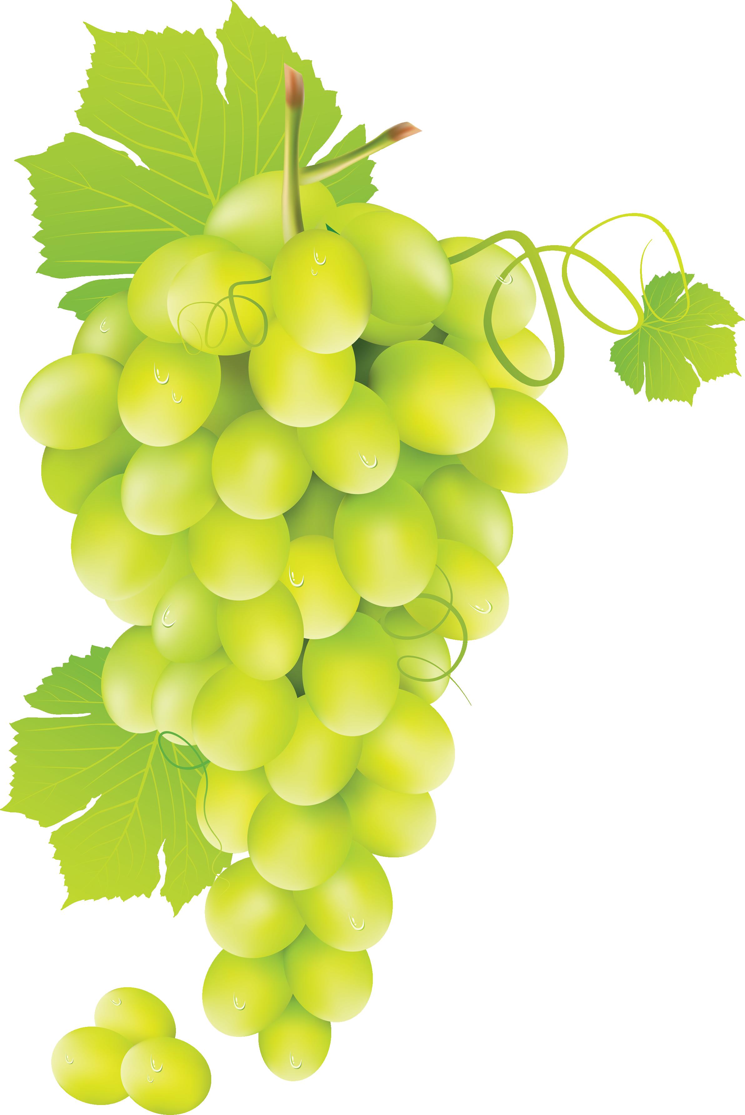 Grape Vine PNG HD Free - 121238
