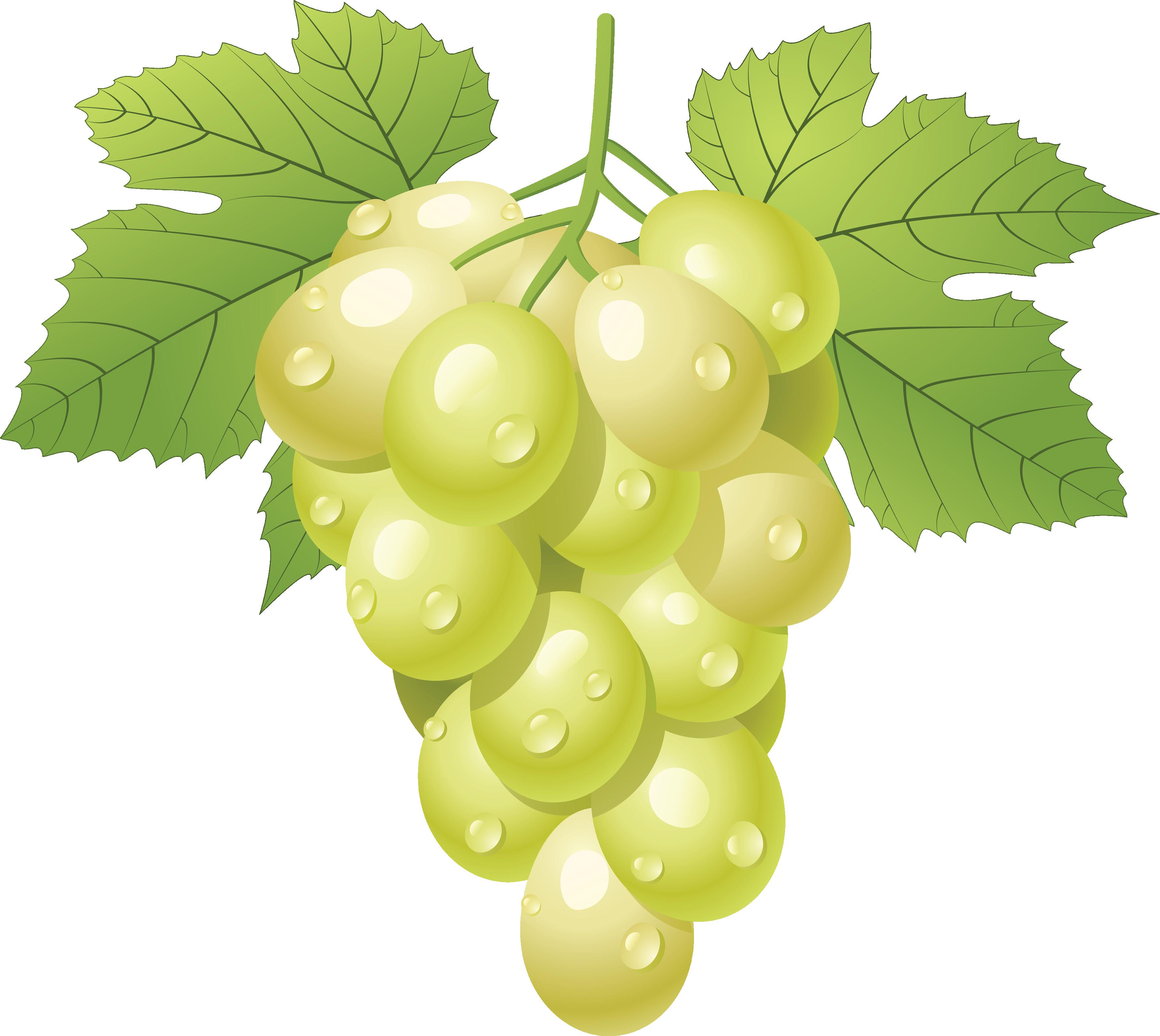 Grape Vine PNG HD Free - 121227