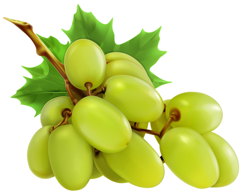 Grape Vine PNG HD Free - 121239