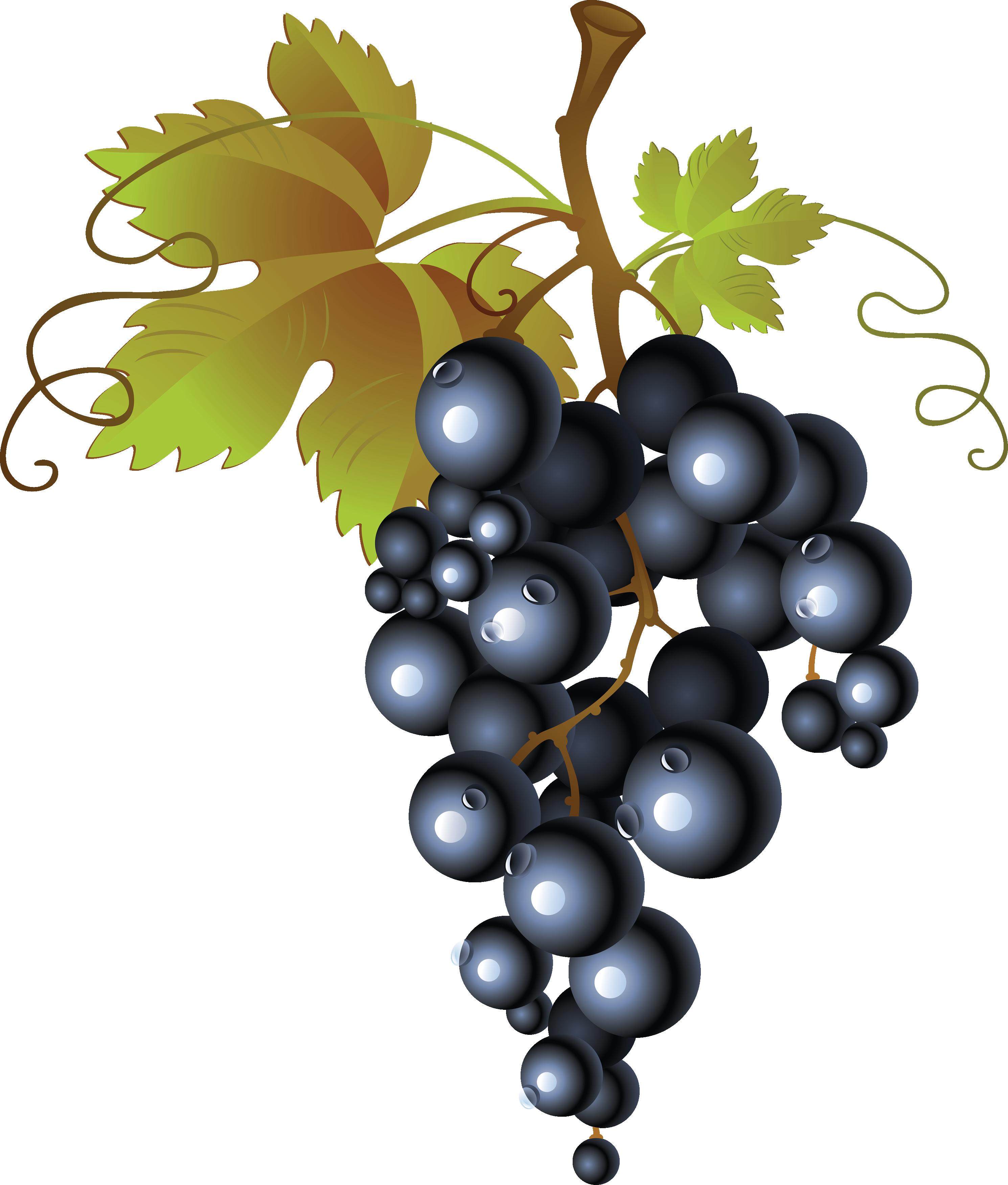 Grape Vine PNG HD Free - 121224