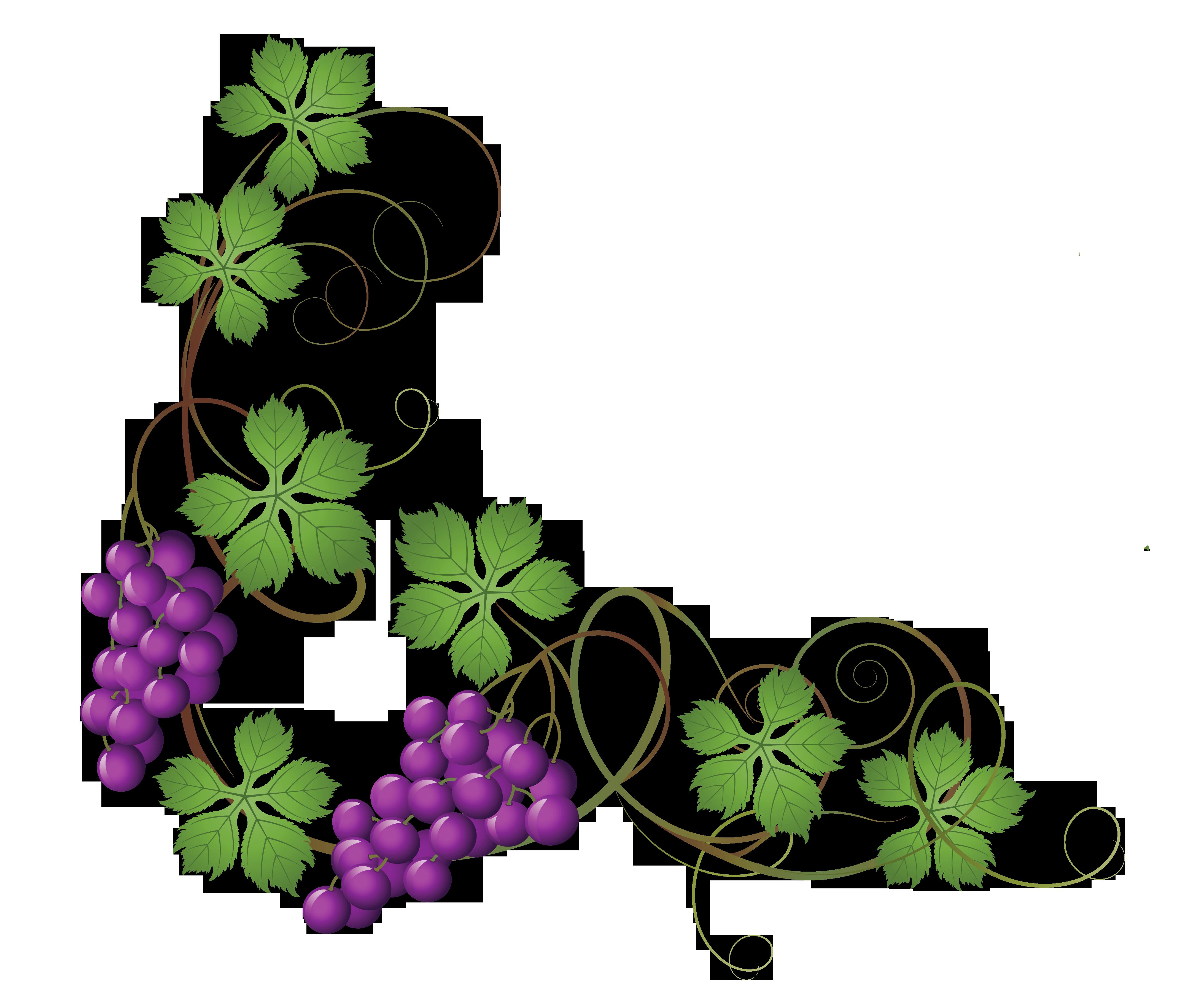 Grape Vine PNG HD Free - 121235