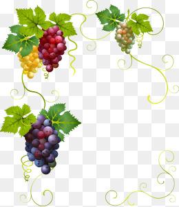 Grape Vine PNG HD Free - 121240