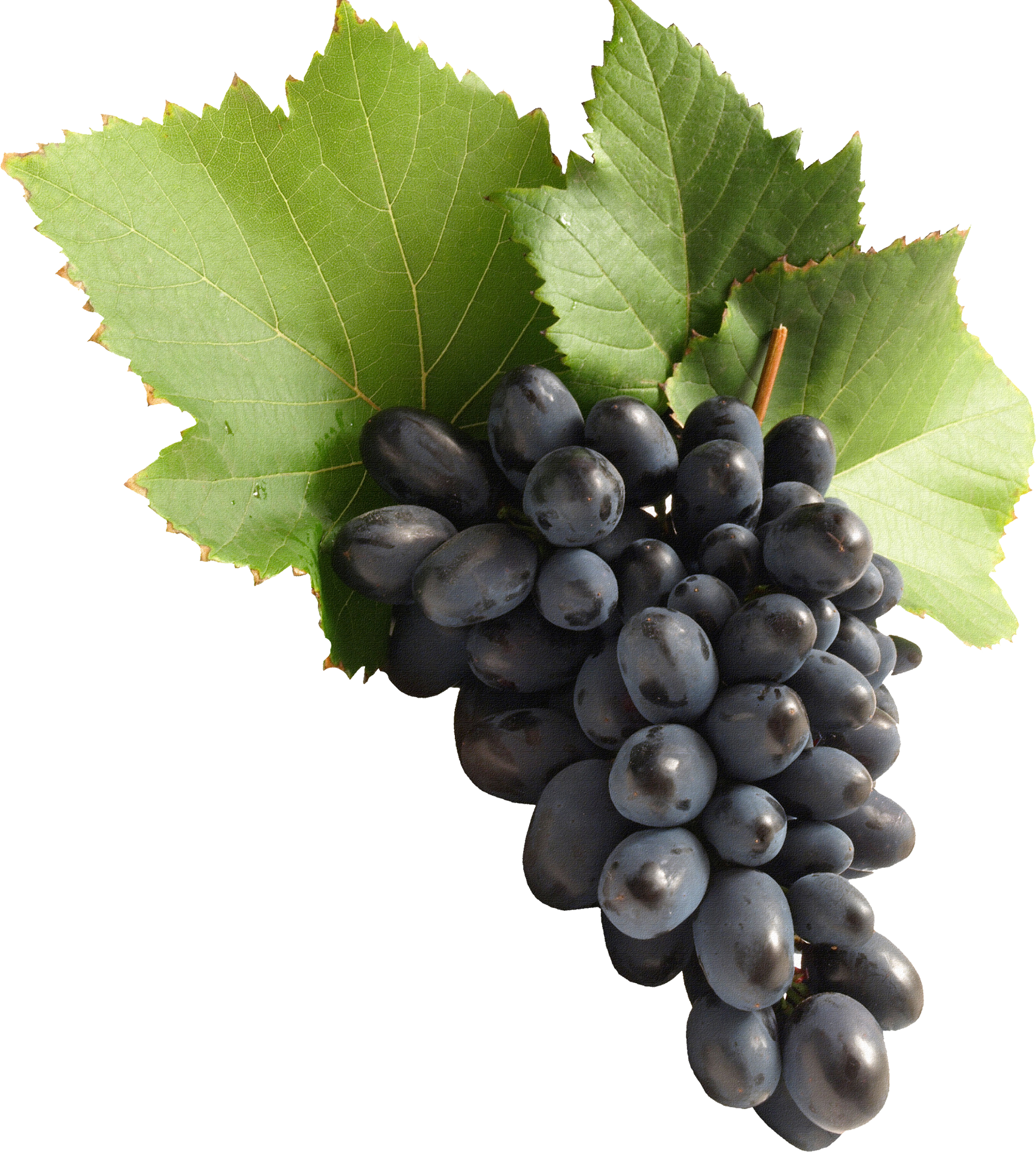 Grape PNG image download, free picture - Grapes HD PNG