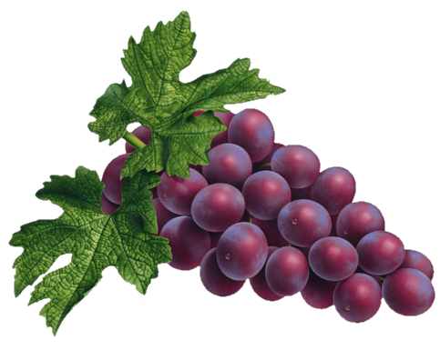 Red Grapes PNG - Grapes HD PNG