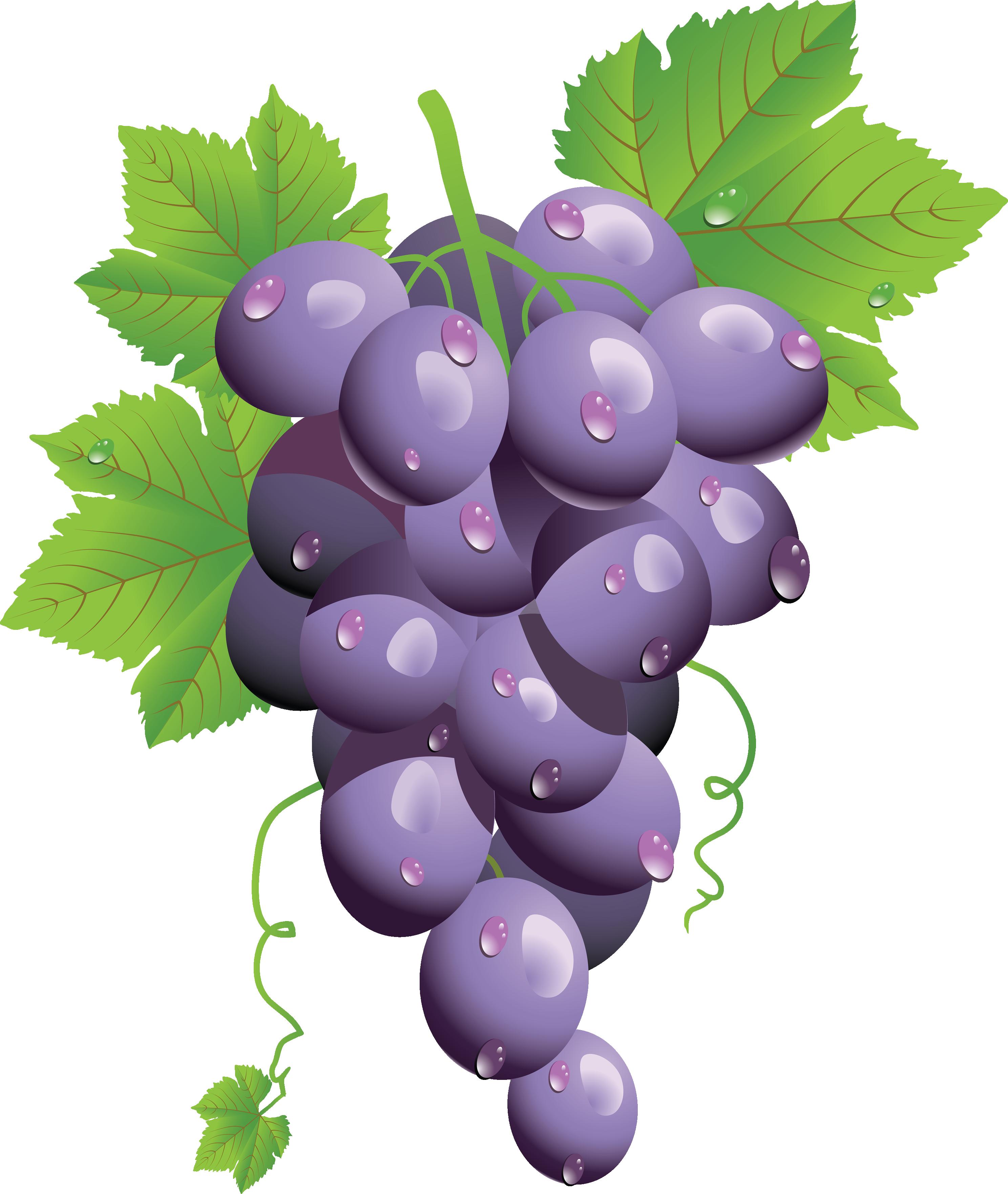 Grapes PNG - 21504