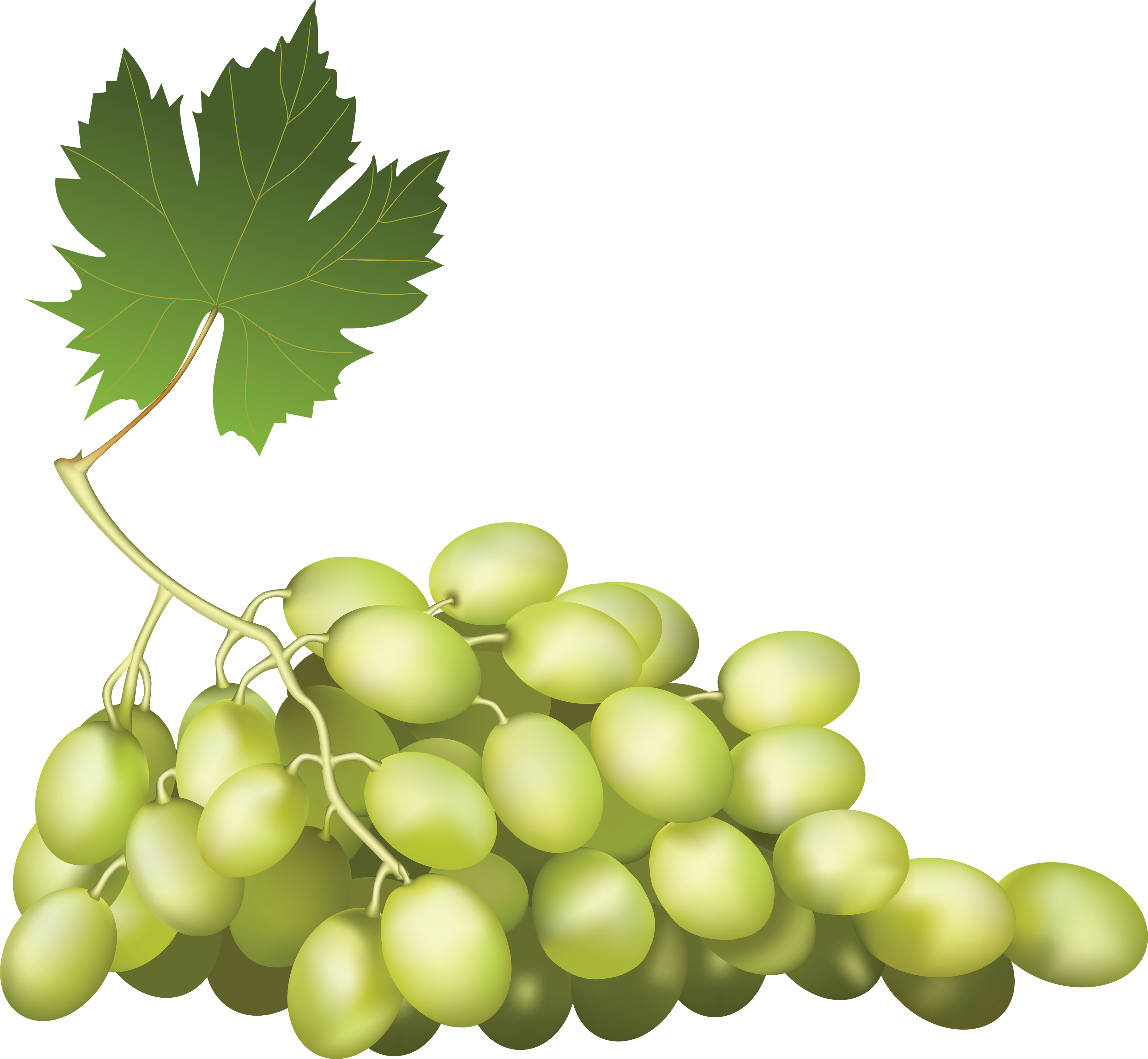 Grape PNG image - Grapes PNG
